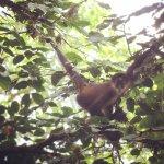 Mono Araña, perezoso de dos dedos y de tres dedos, serpiente Lora.