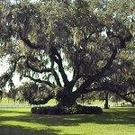 Destrehan Plantation Foto