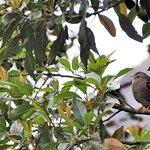 Hôtel Smanapacq : oiseau chanteur