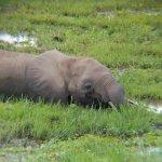 Elephant having a meal