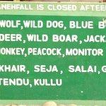 Raneh Falls Flora & Fauna
