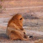 Elephant Plains Game Lodge-billede