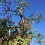 Photo of Corkscrew Swamp Sanctuary