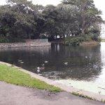 Foto Taman Mawar St. Anne, Dublin