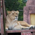 ZOO ST PERE