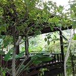 IMG_20171111_163652_large.jpg