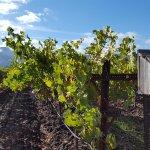 Vineyards and bird house