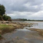 rufiji river view