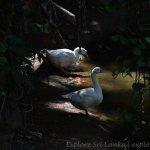 Dehiwala National Zoological Garden