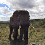 Foto de Shamwari Game Reserve Lodges