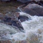 The river rat...poudre river