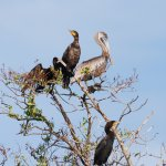 Everglades Area Tours Foto