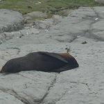 Photo of Ohau Point Seal Colony