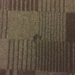 Φωτογραφία: Embassy Suites by Hilton Hotel San Rafael - Marin County / Conference Center