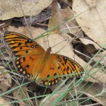 Butterfly on the Blue Trail