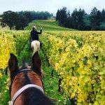 Equestrian Tour thru Oregon Wine Country © Nicole Geils
