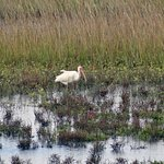 Photo of Galveston Island State Park