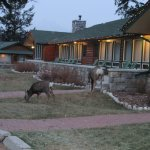 Often see deer and elk on the hotel grouns