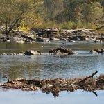Great Falls Park Foto