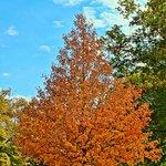 Autumn at Duke Farms