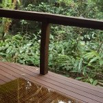 Foto de Songbirds Rainforest Retreat