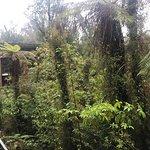 Te Waonui Forest Retreat Foto