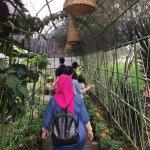 Photo of Begonia Garden