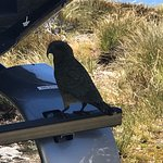 Naughty Kea at Lake Quill on Helicopter Skid