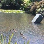 Ducks in the lake