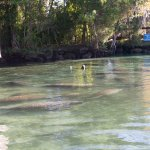 Photo of Manatees In Paradise