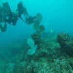Вместе с детьми изучаем глубины подводного мира