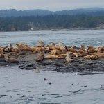 Foto de Eagle Wing Whale Watching Tours