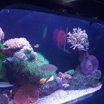 Photo de Underwater Observatory Marine Park