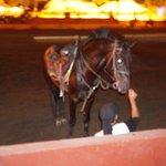 Chez Ali November 2017 - amazing and brave horses