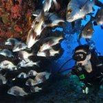 Bild från Atlantis Divers