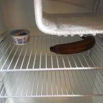 Food rotting in fridge. No housekeeping