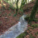 Milky stream due to the china clay particles