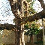 Cheshire Cat Tree