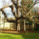 Famous literary tree
