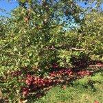 Shelburne Farm照片