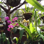 Photo of Mariposas de Mindo - Butterfly Garden