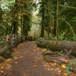 Cathedral Grove resmi