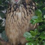 owls so close