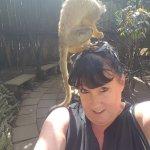 monkey on my head