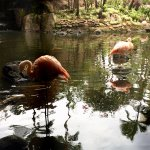 The flamingos greeting