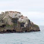 focas e leões marinhos descansando em uma ilhota