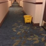 Φωτογραφία: Holiday Inn Express Wilson I-95