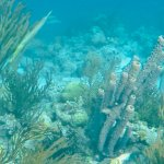 more reef and sponges, fish variety