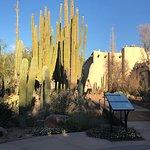 Photo de Desert Botanical Garden