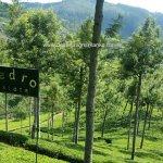 Pedro Tea Plantation Nuwara Eliya